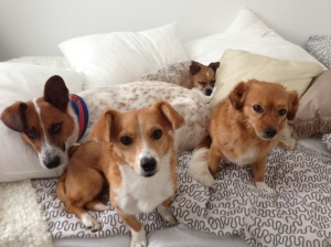 jolanki-dogs
