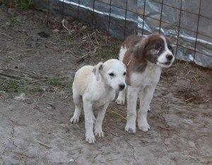 1310-puppies
