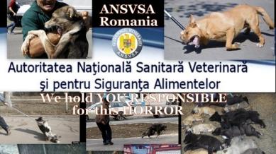 Kuva: Animals Rights Activists Romania