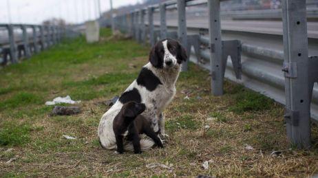 AP_stray_dogs_sr_140131_16x9_992
